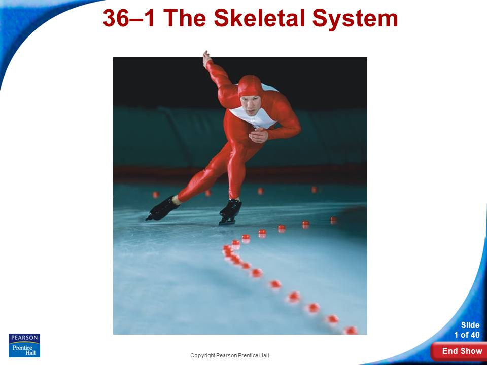 End Show Slide 1 of 40 Copyright Pearson Prentice Hall 36–1 The Skeletal System