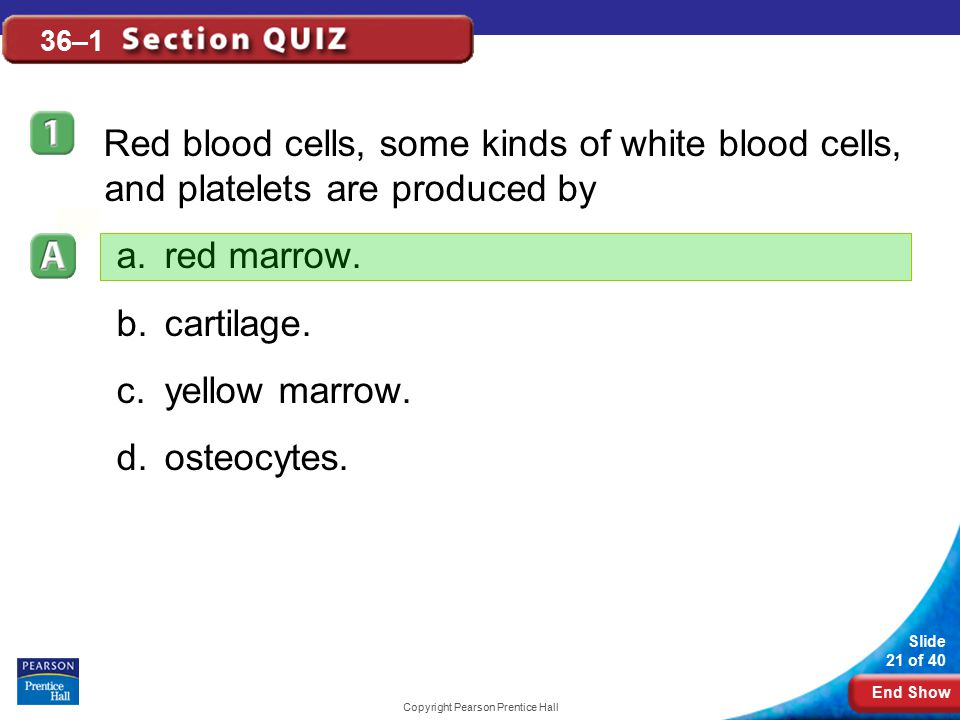 End Show Slide 21 of 40 Copyright Pearson Prentice Hall 36–1 Red blood cells, some kinds of white blood cells, and platelets are produced by a.red mar