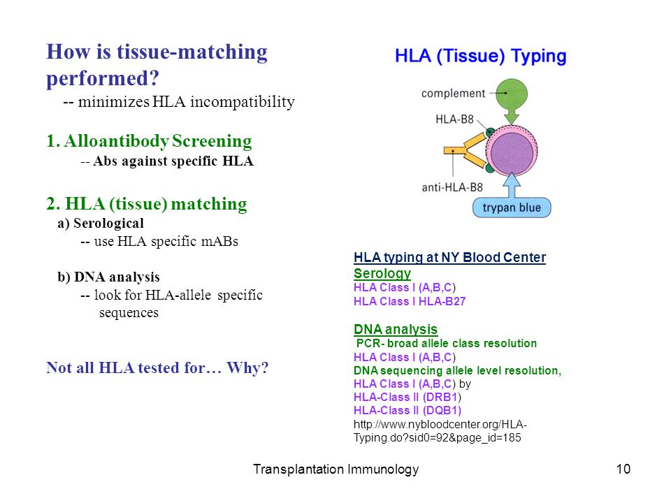 Transplantation Immunology10 How is tissue-matching performed? -- minimizes HLA incompatibility 1. Alloantibody Screening -- Abs against specific HLA