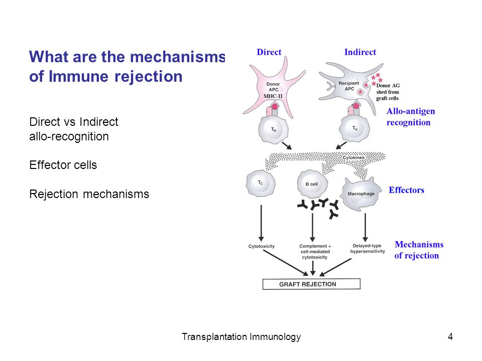 Transplantation Immunology4 What are the mechanisms of Immune rejection Direct vs Indirect allo-recognition Effector cells Rejection mechanisms