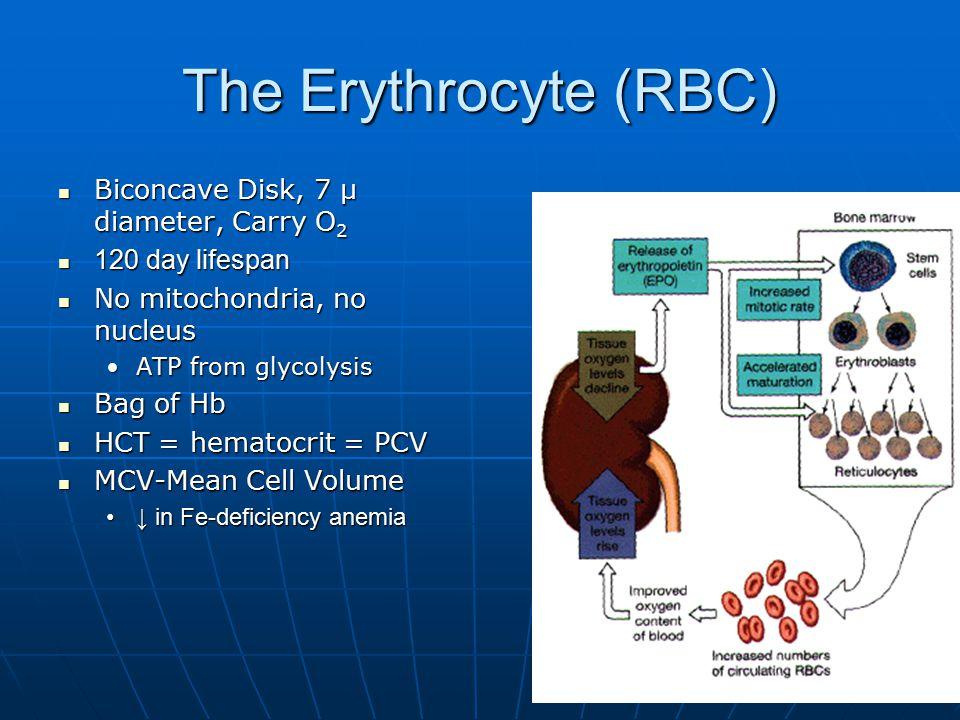 The Erythrocyte (RBC) Biconcave Disk, 7 μ diameter, Carry O 2 Biconcave Disk, 7 μ diameter, Carry O 2 120 day lifespan 120 day lifespan No mitochondria, no nucleus No mitochondria, no nucleus ATP from glycolysisATP from glycolysis Bag of Hb Bag of Hb HCT = hematocrit = PCV HCT = hematocrit = PCV MCV-Mean Cell Volume MCV-Mean Cell Volume ↓ in Fe-deficiency anemia↓ in Fe-deficiency anemia