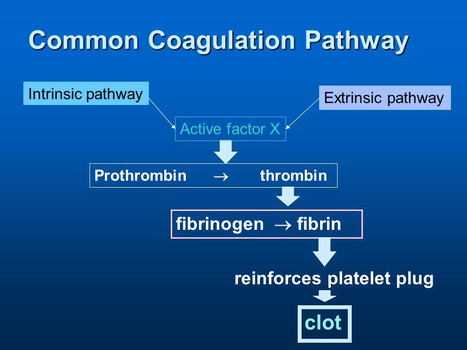 Common Coagulation Pathway reinforces platelet plug fibrinogen  fibrin Prothrombin  thrombin clot Intrinsic pathway Extrinsic pathway Active factor X