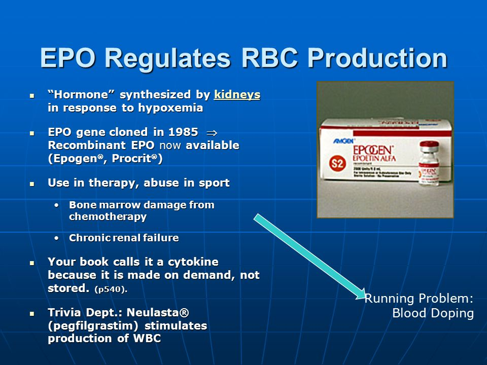 "EPO Regulates RBC Production ""Hormone"" synthesized by kidneys in response to hypoxemia ""Hormone"" synthesized by kidneys in response to hypoxemiakidney"