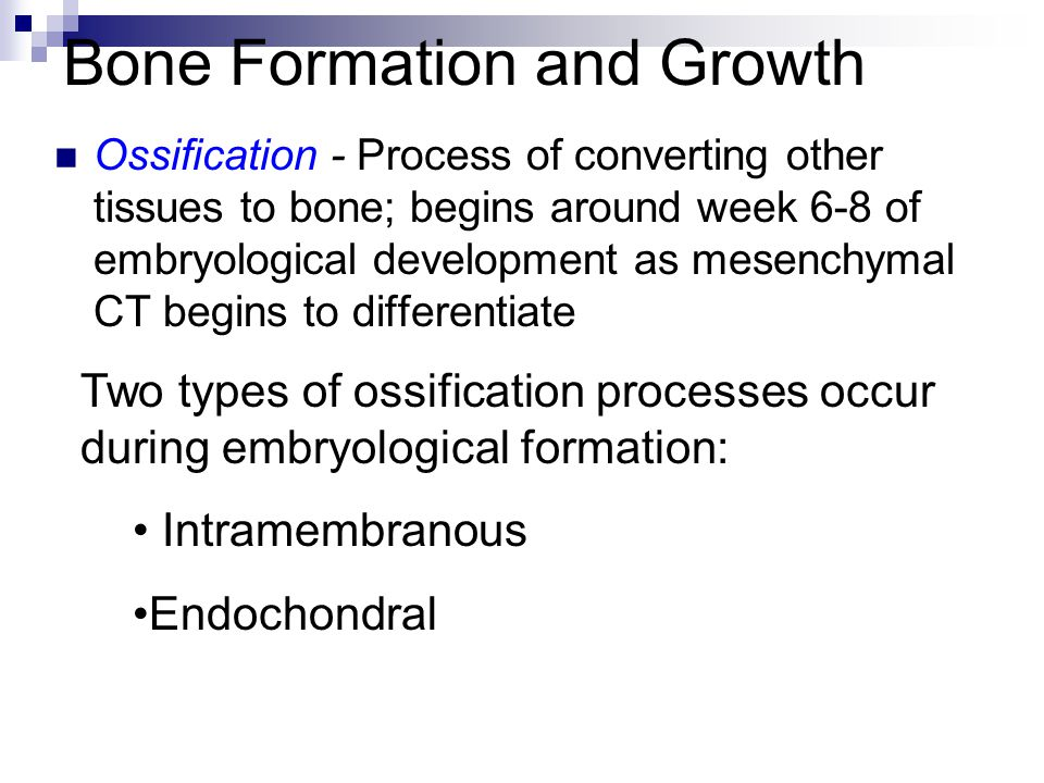 Bone Formation and Growth Ossification - Process of converting other tissues to bone; begins around week 6-8 of embryological development as mesenchym