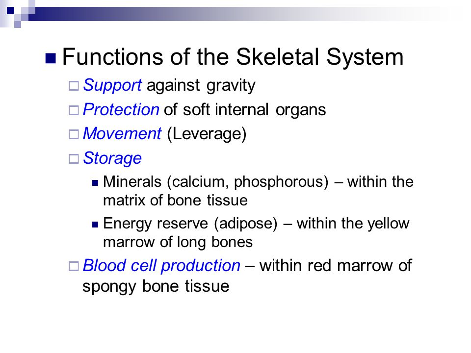 The Structure of a Typical Bone All bones have a combination of spongy (cancellous) & compact (dense) bone tissue
