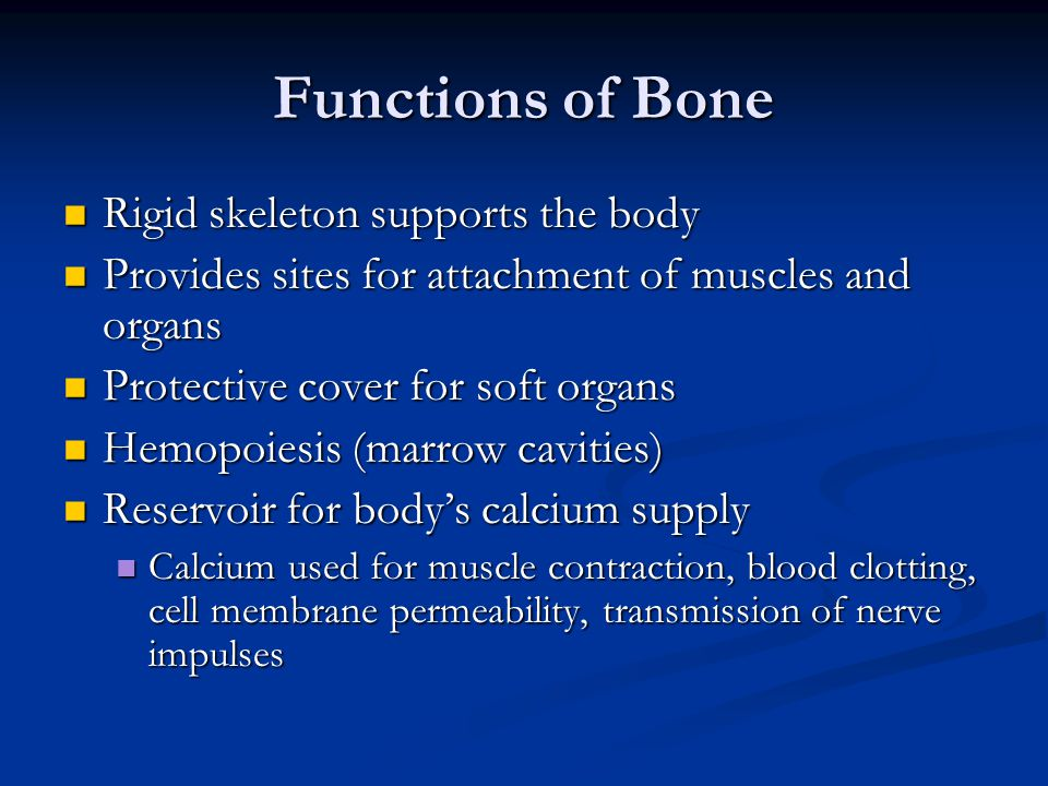 Functions of Bone Rigid skeleton supports the body Rigid skeleton supports the body Provides sites for attachment of muscles and organs Provides sites