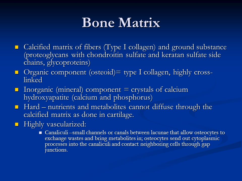Bone Matrix Calcified matrix of fibers (Type I collagen) and ground substance (proteoglycans with chondroitin sulfate and keratan sulfate side chains,