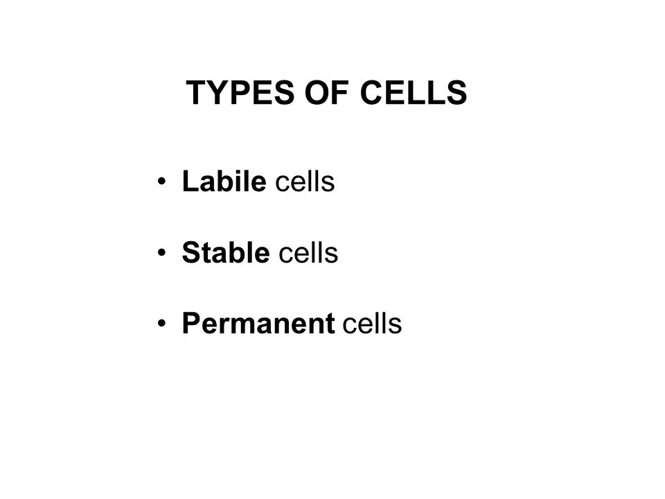 TYPES OF CELLS Labile cells Stable cells Permanent cells