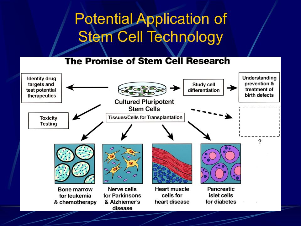 Potential Application of Stem Cell Technology