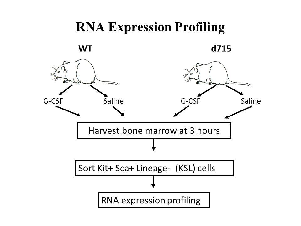 WTd715 G-CSFSaline Harvest bone marrow at 3 hours RNA expression profiling RNA Expression Profiling Sort Kit+ Sca+ Lineage- (KSL) cells