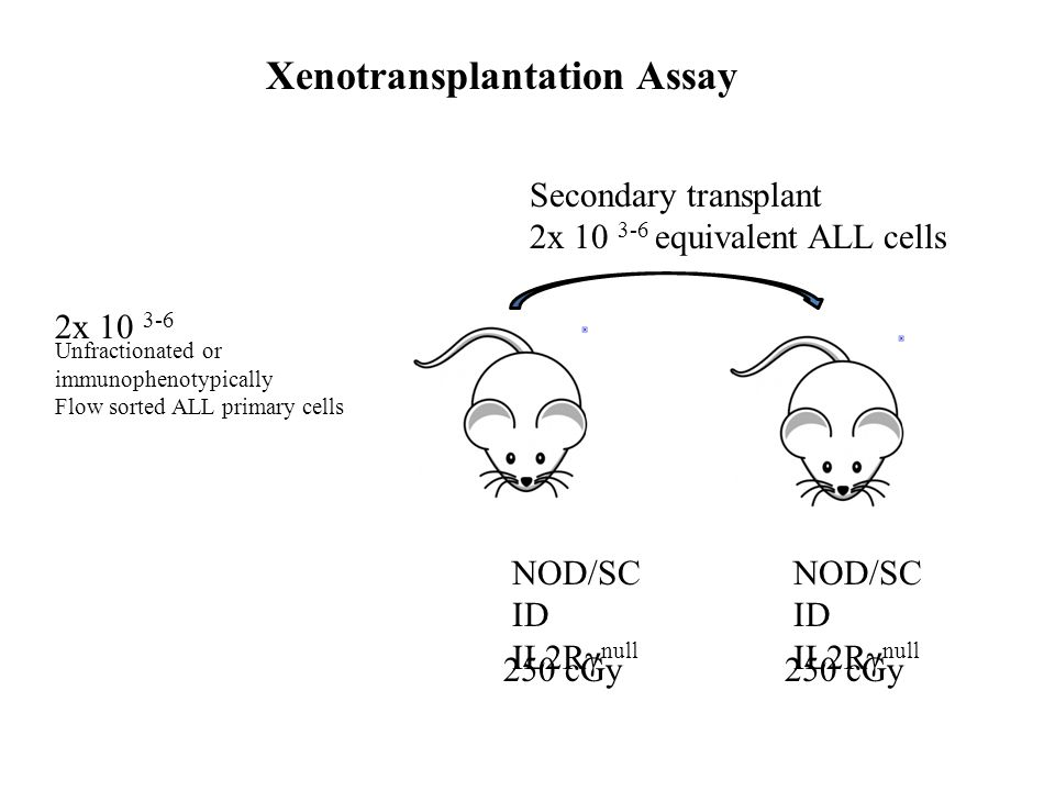 2x 10 3-6 Unfractionated or immunophenotypically Flow sorted ALL primary cells NOD/SC ID IL2Rγ null Secondary transplant 2x 10 3-6 equivalent ALL cell