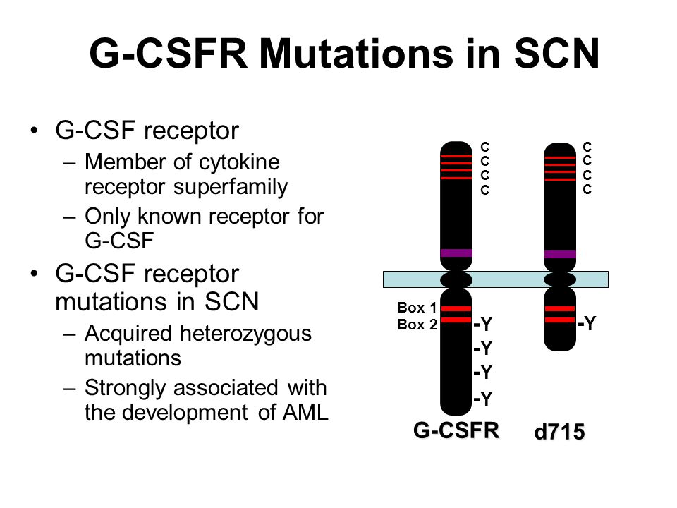 G-CSFR Mutations in SCN G-CSF receptor –Member of cytokine receptor superfamily –Only known receptor for G-CSF G-CSF receptor mutations in SCN –Acquir
