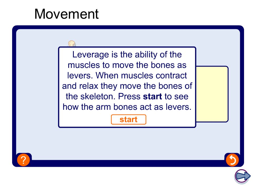 GCSE Physical Education The Skeletal System Part 1 – The structure of the skeletal system Objectives… 1.To be aware of the bones that make up the skeletal system.