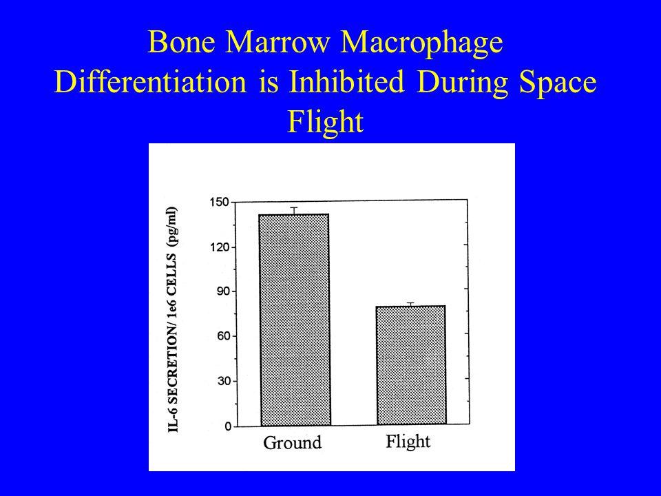 Space Flight Enhances Macrophage Cytokine Secretion