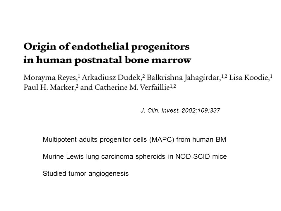 Multipotent adults progenitor cells (MAPC) from human BM Murine Lewis lung carcinoma spheroids in NOD-SCID mice Studied tumor angiogenesis J.