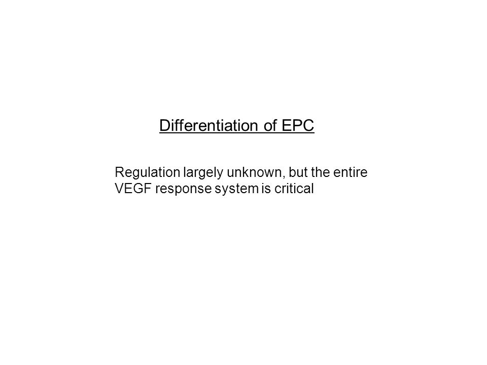Regulation largely unknown, but the entire VEGF response system is critical Differentiation of EPC