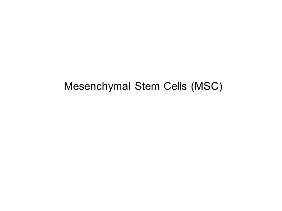 Mesenchymal Stem Cells (MSC)