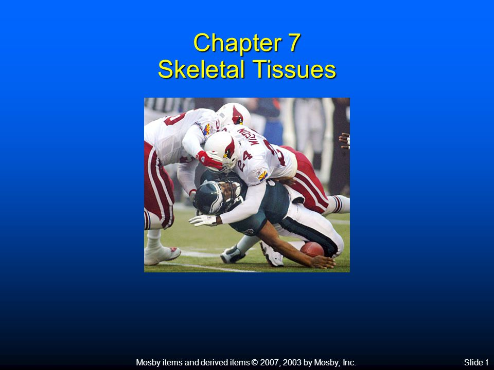 Mosby items and derived items © 2007, 2003 by Mosby, Inc.Slide 1 Chapter 7 Skeletal Tissues