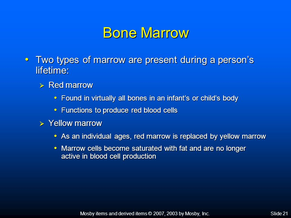 Mosby items and derived items © 2007, 2003 by Mosby, Inc.Slide 21 Bone Marrow Two types of marrow are present during a person's lifetime: Two types of