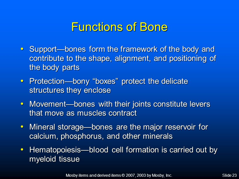 Mosby items and derived items © 2007, 2003 by Mosby, Inc.Slide 23 Functions of Bone Support—bones form the framework of the body and contribute to the