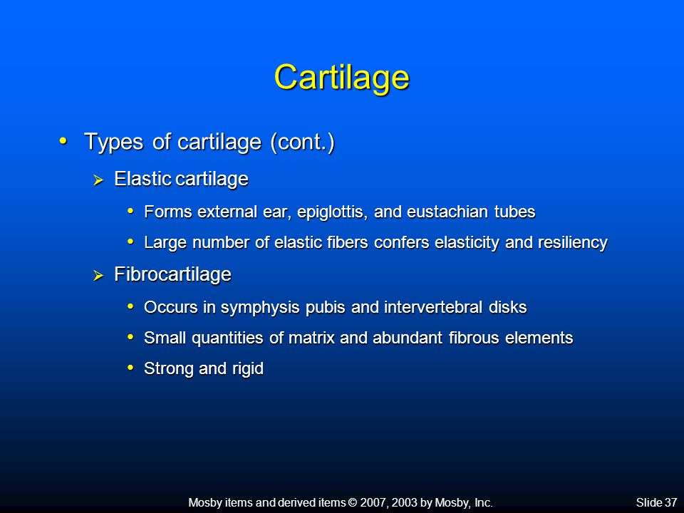 Mosby items and derived items © 2007, 2003 by Mosby, Inc.Slide 37 Cartilage Types of cartilage (cont.) Types of cartilage (cont.)  Elastic cartilage