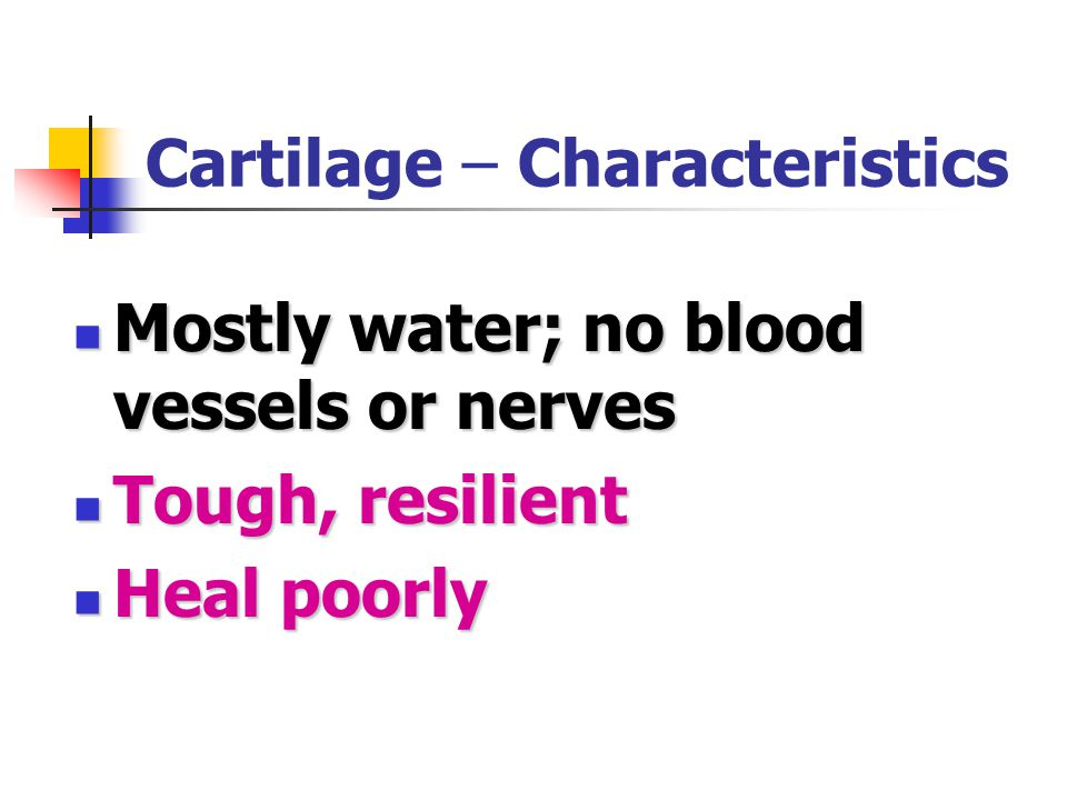 Cartilage – Characteristics Mostly water; no blood vessels or nerves Mostly water; no blood vessels or nerves Tough, resilient Tough, resilient Heal poorly Heal poorly