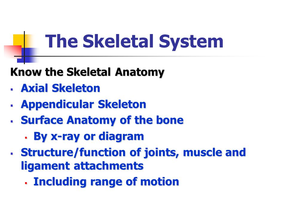 The Skeletal System Know the Skeletal Anatomy  Axial Skeleton  Appendicular Skeleton  Surface Anatomy of the bone  By x-ray or diagram  Structure/function of joints, muscle and ligament attachments  Including range of motion
