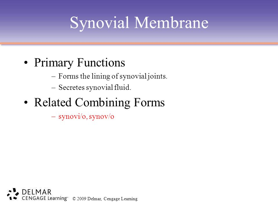 © 2009 Delmar, Cengage Learning Synovial Membrane Primary Functions –Forms the lining of synovial joints.