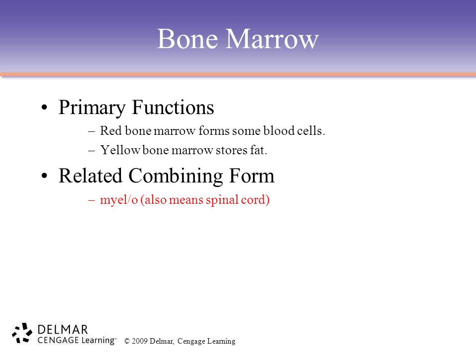 © 2009 Delmar, Cengage Learning Bone Marrow Primary Functions –Red bone marrow forms some blood cells. –Yellow bone marrow stores fat. Related Combini