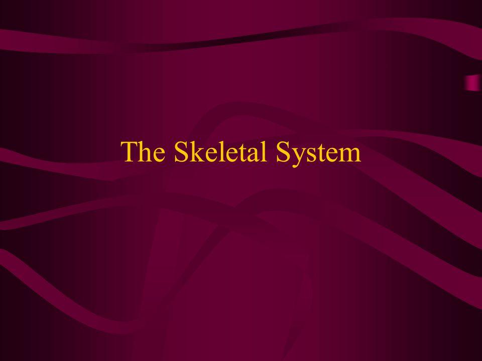 Skeletal System Bony tissues that form the body's framework comprise the Skeletal System.