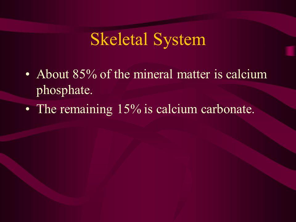 Skeletal System The inner core of bones is soft tissue called bone marrow.