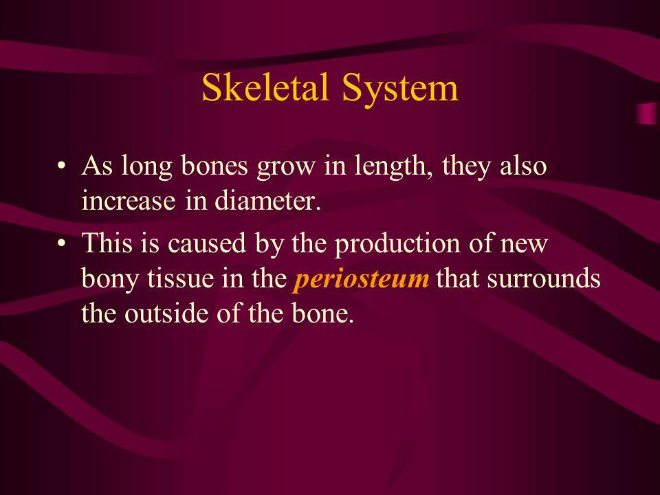Skeletal System - Pelvic Pelvis Ilium Ischium Femur Patella Tibia and Fibula Tarsus Metatarus Phalanges