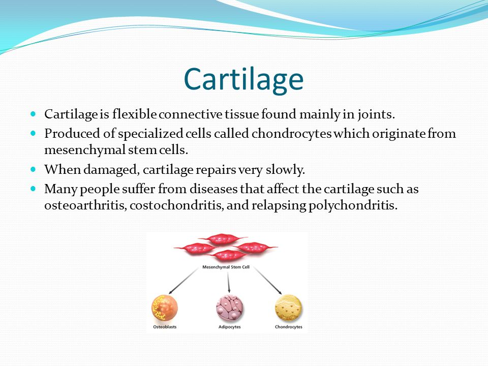 Cartilage Cartilage is flexible connective tissue found mainly in joints. Produced of specialized cells called chondrocytes which originate from mesen