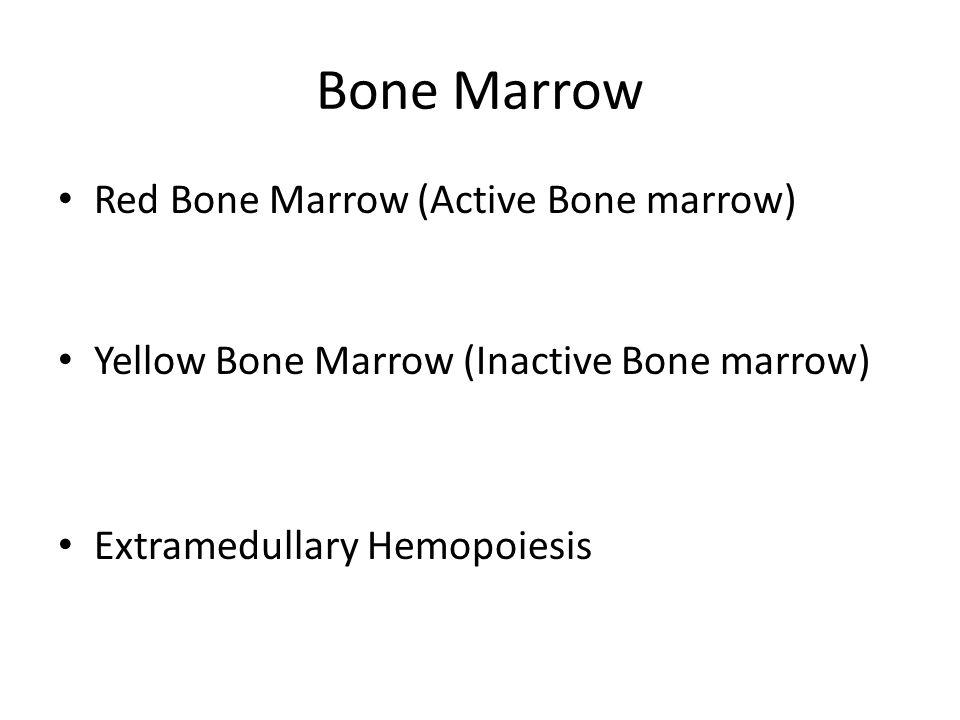 Bone Marrow Red Bone Marrow (Active Bone marrow) Yellow Bone Marrow (Inactive Bone marrow) Extramedullary Hemopoiesis