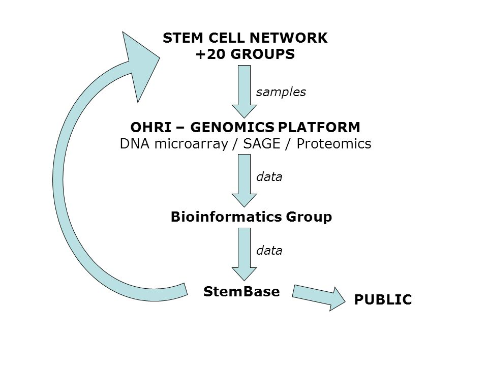 STEM CELL NETWORK +20 GROUPS OHRI – GENOMICS PLATFORM DNA microarray / SAGE / Proteomics Bioinformatics Group StemBase samples data PUBLIC