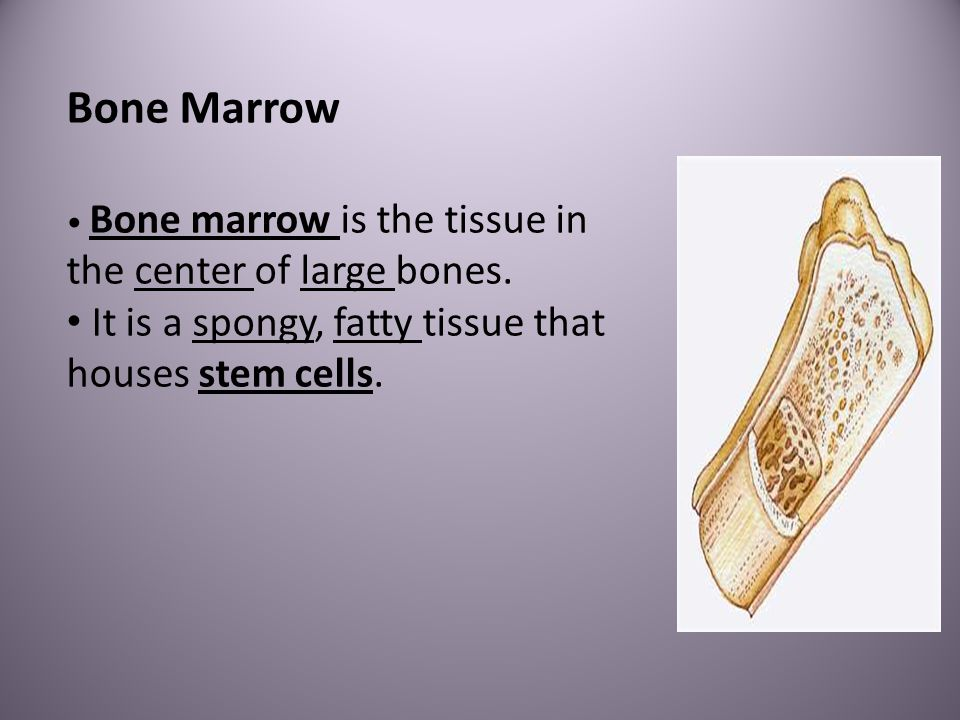 Bone Marrow Bone marrow is the tissue in the center of large bones. It is a spongy, fatty tissue that houses stem cells.