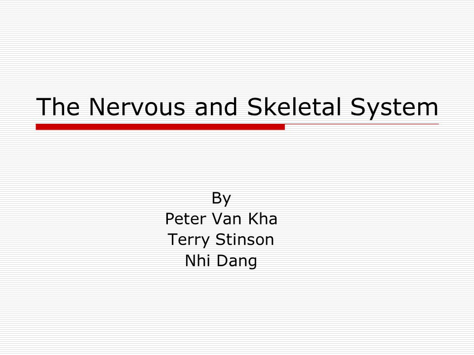 The Nervous and Skeletal System By Peter Van Kha Terry Stinson Nhi Dang