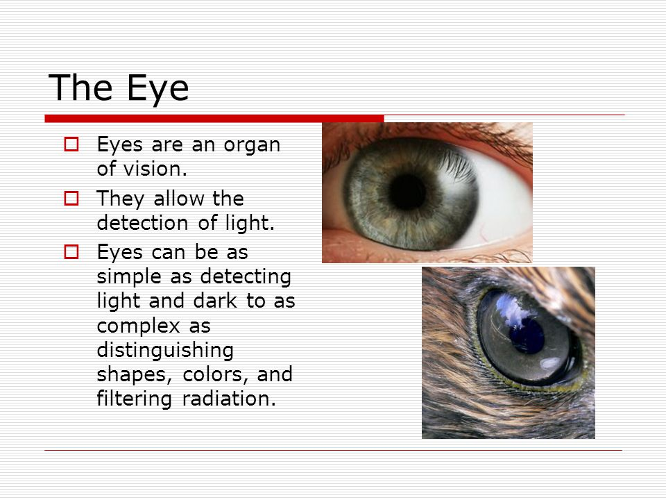 The Eye  Eyes are an organ of vision.  They allow the detection of light.  Eyes can be as simple as detecting light and dark to as complex as disti