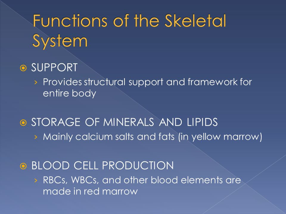  SUPPORT › Provides structural support and framework for entire body  STORAGE OF MINERALS AND LIPIDS › Mainly calcium salts and fats (in yellow marr