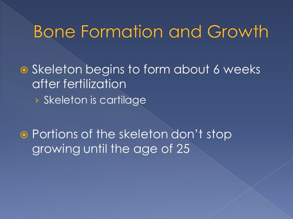  Skeleton begins to form about 6 weeks after fertilization › Skeleton is cartilage  Portions of the skeleton don't stop growing until the age of 25