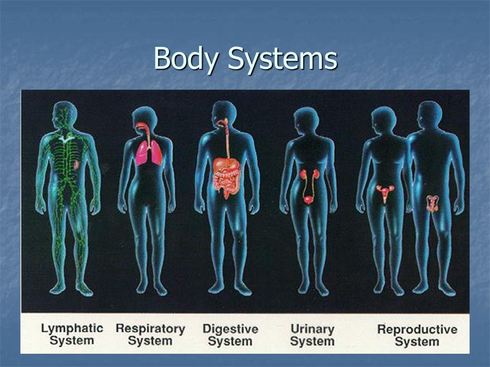 Active sites of red bone marrow