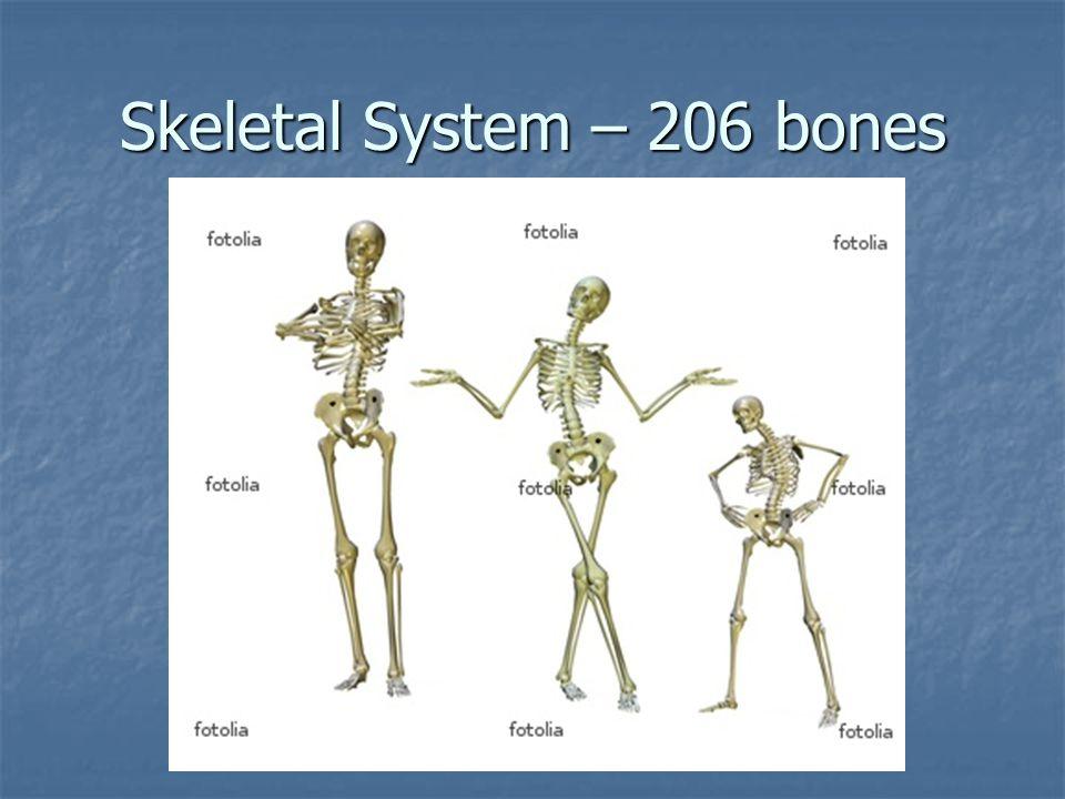 Bone Disorders Osteoporosis – weak bones due to loss of density Osteoporosis – weak bones due to loss of density