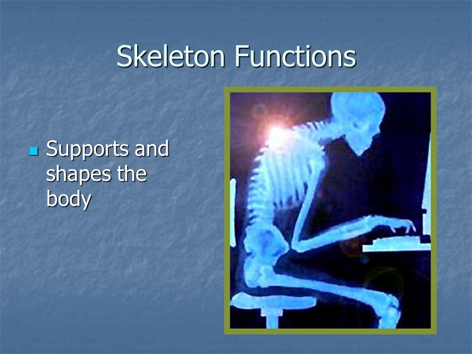 Structure of Bones Periosteum – tough layer of connective tissue Periosteum – tough layer of connective tissue