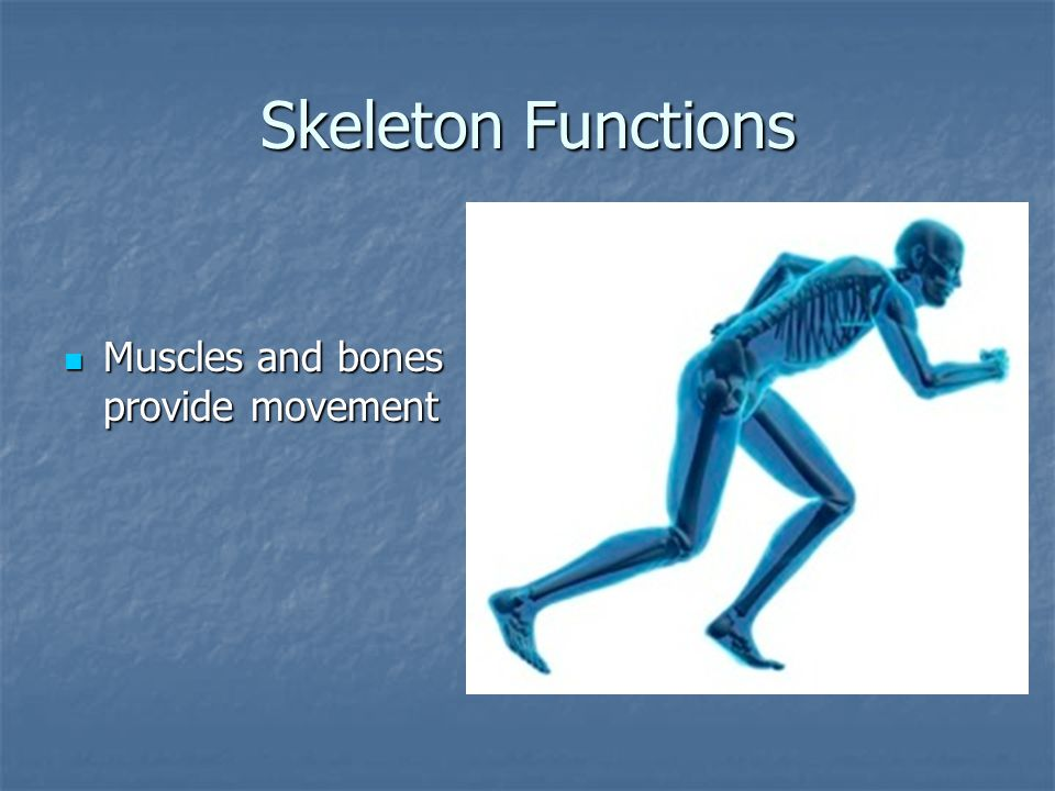 Smooth Muscle Move your internal organs Move your internal organs