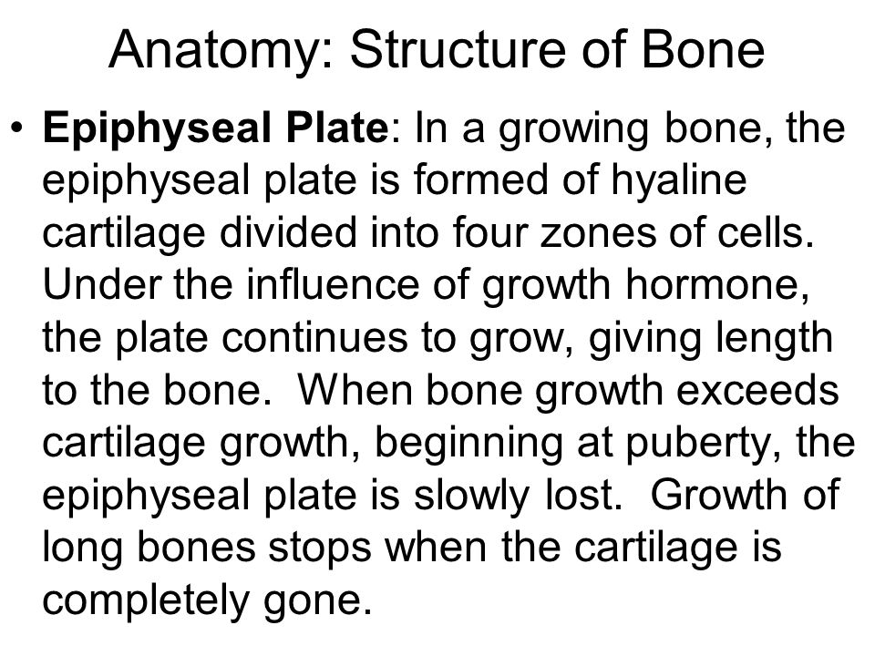 Anatomy: Structure of Bone Epiphyseal Plate: In a growing bone, the epiphyseal plate is formed of hyaline cartilage divided into four zones of cells.