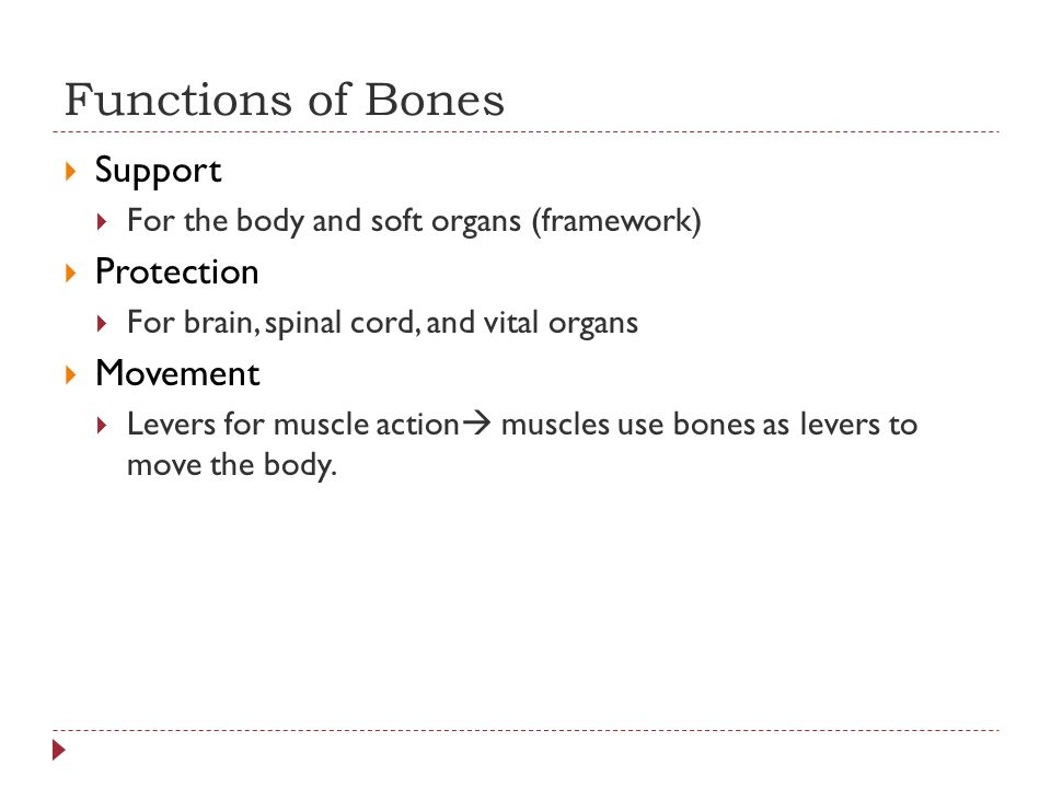 Functions of Bones  Support  For the body and soft organs (framework)  Protection  For brain, spinal cord, and vital organs  Movement  Levers for muscle action  muscles use bones as levers to move the body.