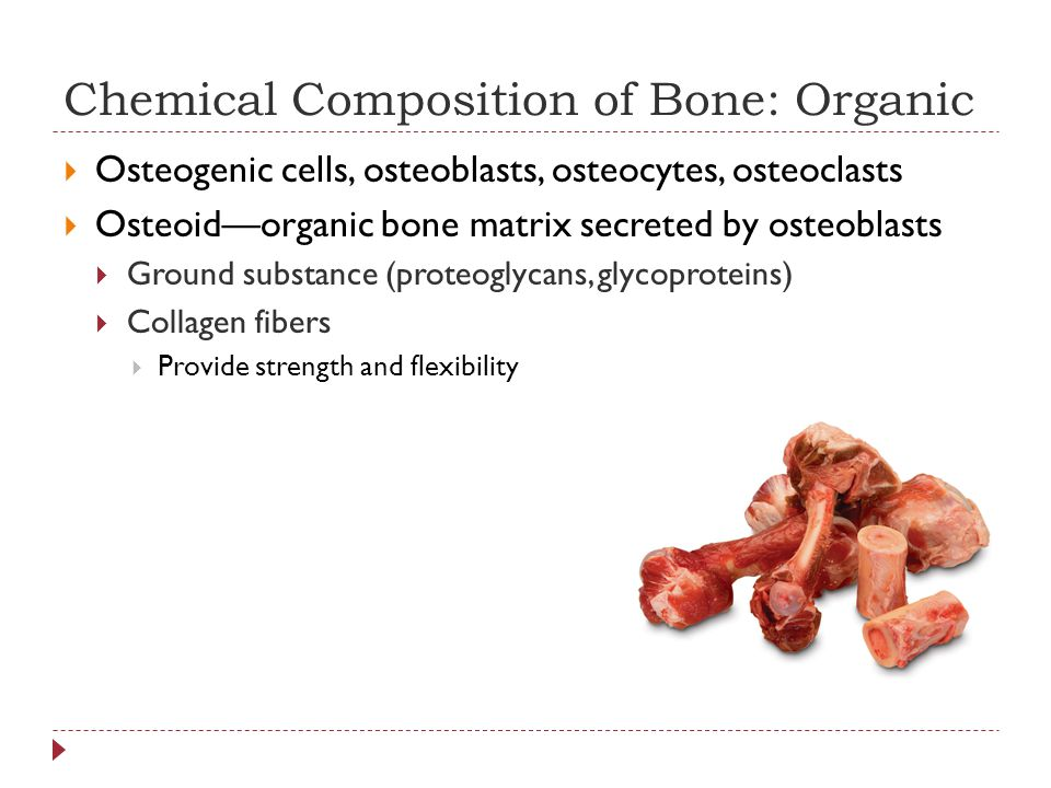 Chemical Composition of Bone: Organic  Osteogenic cells, osteoblasts, osteocytes, osteoclasts  Osteoid—organic bone matrix secreted by osteoblasts  Ground substance (proteoglycans, glycoproteins)  Collagen fibers  Provide strength and flexibility