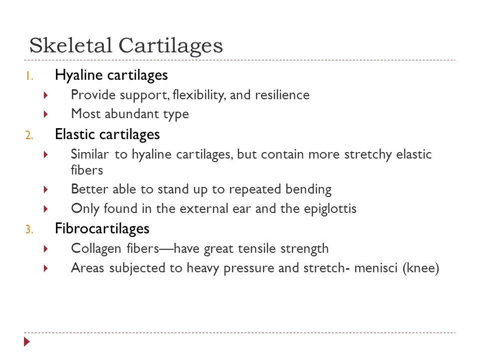 Skeletal Cartilages 1.