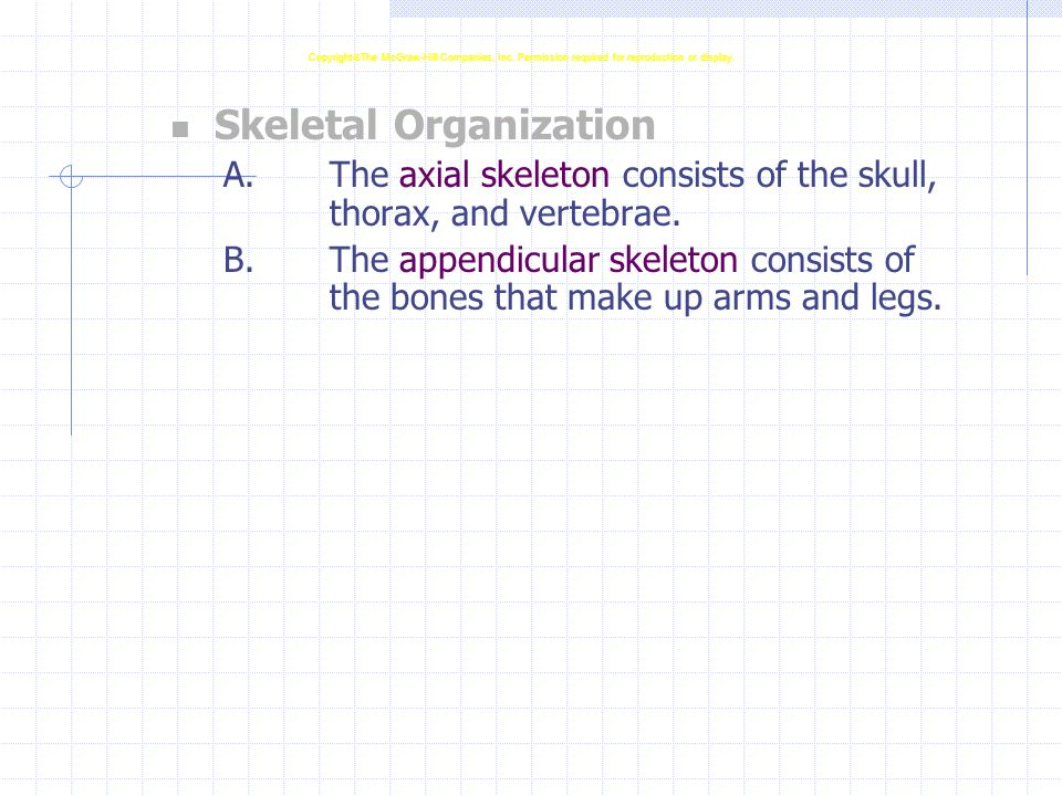 Skeletal Organization A.The axial skeleton consists of the skull, thorax, and vertebrae.