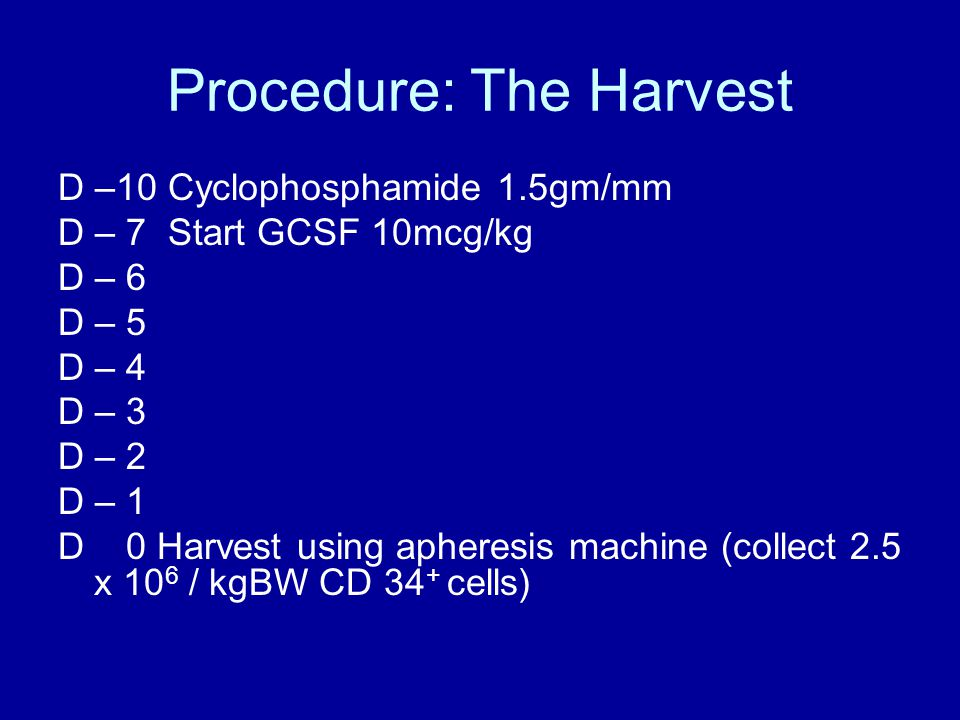 Procedure: The Harvest D –10 Cyclophosphamide 1.5gm/mm D – 7 Start GCSF 10mcg/kg D – 6 D – 5 D – 4 D – 3 D – 2 D – 1 D 0 Harvest using apheresis machine (collect 2.5 x 10 6 / kgBW CD 34 + cells)